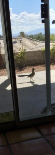 Road Runner crop (1)